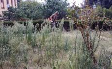 taglio erba villa chigi castelnuovo berardenga (1)