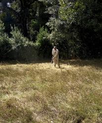 taglio erba villa chigi castelnuovo berardenga (3)