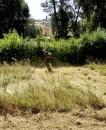 taglio erba villa chigi castelnuovo berardenga (5)