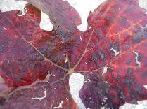 autunno nel chianti e l'eroica (14)