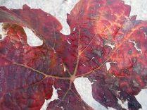 autunno nel chianti e l'eroica (15)