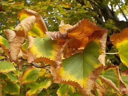 autunno nel chianti e l'eroica (22)