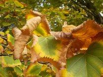 autunno nel chianti e l'eroica (23)