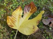 autunno nel chianti e l'eroica (4)