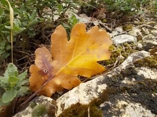 autunno nel chianti e l'eroica (7)