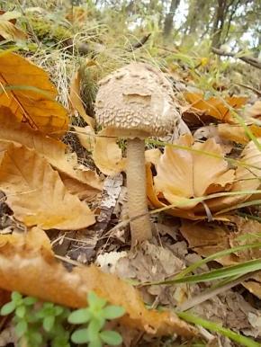 bosco, chianti, autunno, funghi, vertine, castagne (19)