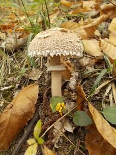 bosco, chianti, autunno, funghi, vertine, castagne (28)
