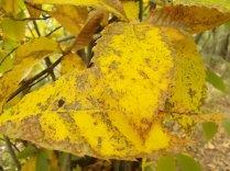 bosco, chianti, autunno, funghi, vertine, castagne (47)
