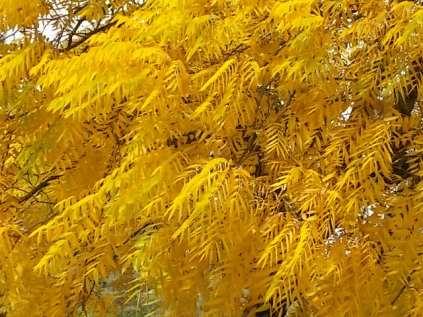foglie di noce (7)