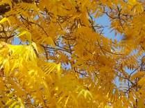 foglie di noce (8)