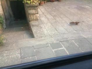scoiattolo di vertine (2)