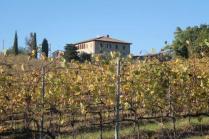 vigne pagliarese autunno 2019 (1)