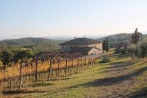 vigne pagliarese autunno 2019 (10)