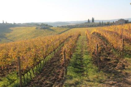 vigne pagliarese autunno 2019 (11)