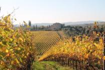 vigne pagliarese autunno 2019 (12)