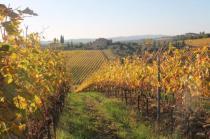 vigne pagliarese autunno 2019 (13)