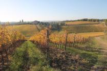 vigne pagliarese autunno 2019 (14)