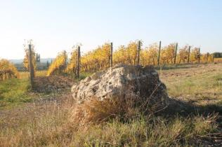 vigne pagliarese autunno 2019 (15)