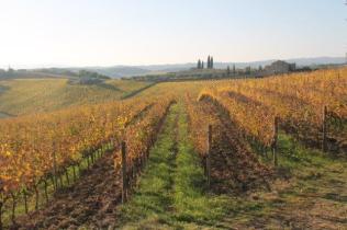 vigne pagliarese autunno 2019 (16)