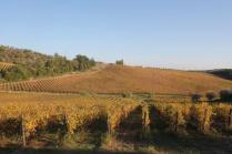 vigne pagliarese autunno 2019 (17)