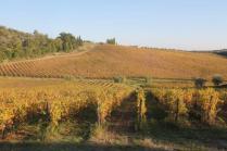 vigne pagliarese autunno 2019 (18)