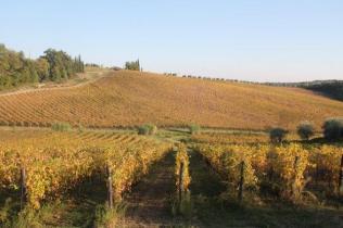 vigne pagliarese autunno 2019 (19)
