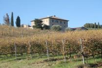 vigne pagliarese autunno 2019 (2)
