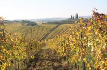 vigne pagliarese autunno 2019 (3)