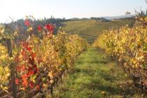 vigne pagliarese autunno 2019 (4)
