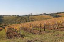 vigne pagliarese autunno 2019 (5)
