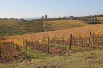 vigne pagliarese autunno 2019 (6)