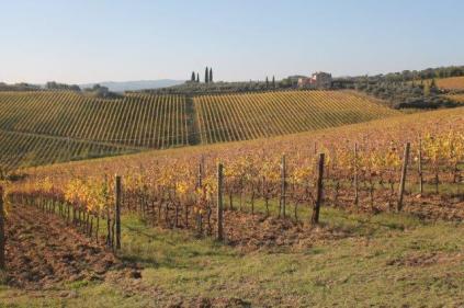 vigne pagliarese autunno 2019 (7)