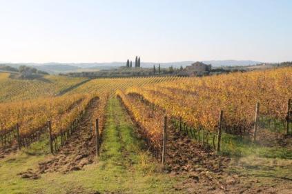 vigne pagliarese autunno 2019 (8)