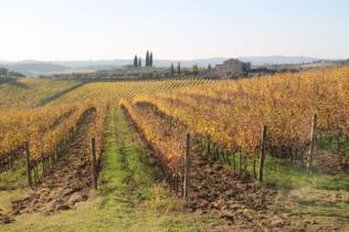 vigne pagliarese autunno 2019 (9)