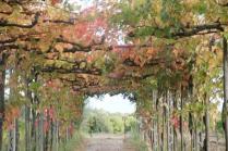 vitarium viti rosse san felice (16)