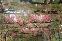 vitarium viti rosse san felice (32)