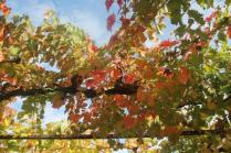 vitarium viti rosse san felice (4)