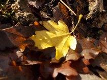 vertine bosco funghi novembre (6)
