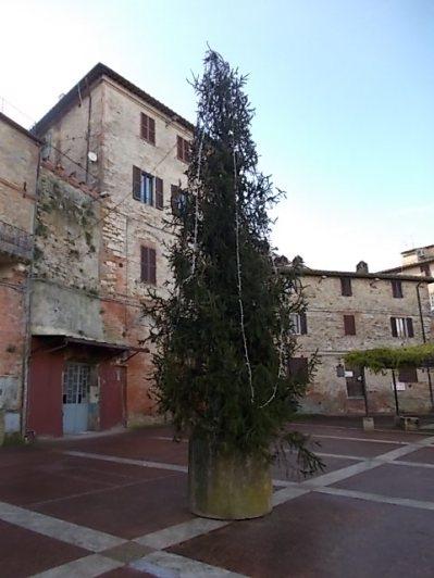 albero natale castelnuovo berardenga (1)