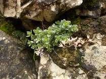 muschio su muro di terrazza (1)