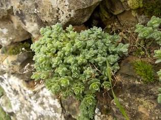 muschio su muro di terrazza (11)