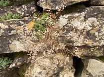 muschio su muro di terrazza (2)
