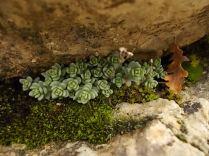 muschio su muro di terrazza (7)