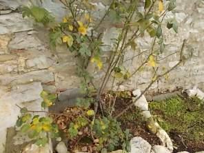 potare le rose (2)