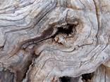 tronco di moro gelso (18)