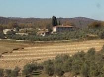 vigna a terrazze chianti vertine (2)