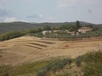 vigna a terrazze chianti vertine (6)