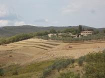 vigna a terrazze chianti vertine (7)