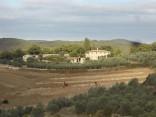 vigna a terrazze chianti vertine (9)