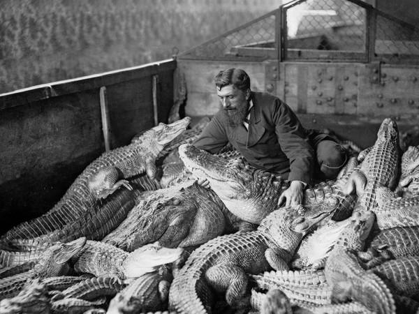 98261-Fratelli-Alinari_Ritratto-di-un-uomo-in-mezzo-ad-alligatori-e-caimani-nellacquario-indoafricano-di-Firenze_1915-20-circa